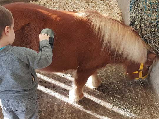 Pony being groomed
