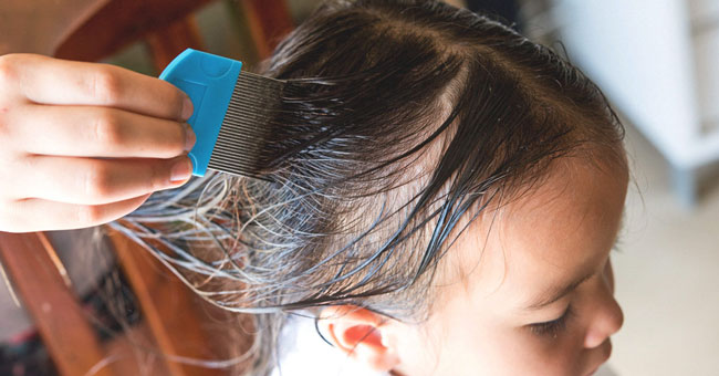Head lice comb